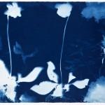 5.cyanotype