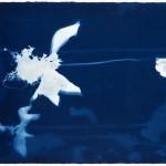 4.cyanotype